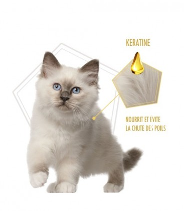 Shampooing Sans Rinçage - Effet fraîcheur 24h pour chien