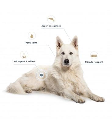 Huile de Saumon chien & chat